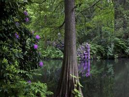 Amparo Garrido. Un jardín romántico alemán