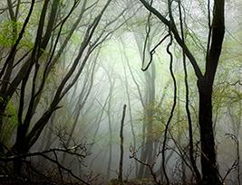 Un bosque en el Centro de Arte Alcobendas